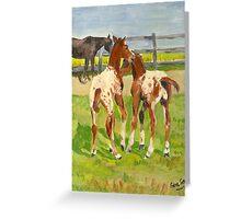 Appaloosa Foals Portrait Greeting Card