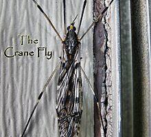 The Crane Fly by EbelArt