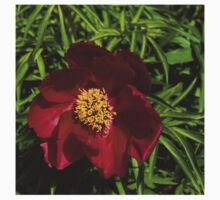 Deep Red Peony With Bright Yellow Stamens  One Piece - Short Sleeve