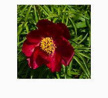 Deep Red Peony With Bright Yellow Stamens  Womens Fitted T-Shirt