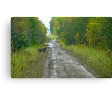 Deer on The Road...Better Run! Canvas Print