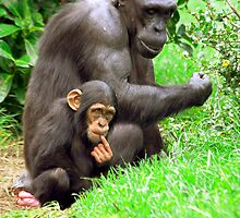 Chimpanzee and her baby by Dave  Knowles