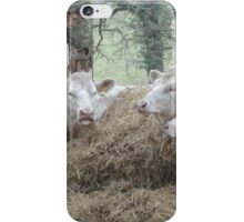 The cow sticks her tongue out ! iPhone Case/Skin