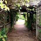 Garden Walk by Nicole I Hamilton