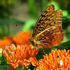 Butterfly and Moths by swaby