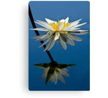 Water Lily Dream Canvas Print