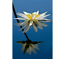 Water Lily Dream Photographic Print