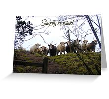 Simply bovine! Photo of cows. Greeting Card