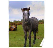 Dartmoor: A Bad Wig? Poster