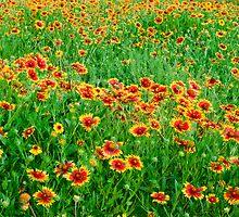 Sea of Wildflowers by Chuck Fletcher