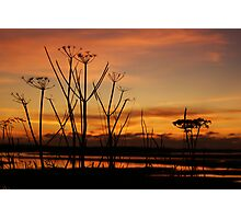 Tranquil Devonian Sunset Photographic Print
