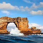 Darwins Arch by Norbert Probst