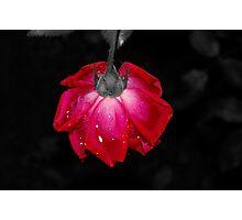 Dewy Love 2 Photographic Print