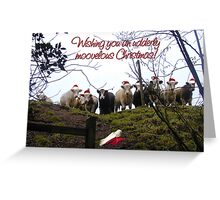 Christmas cows wearing Santa Hats! Greeting Card