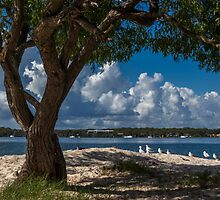 Sand and Seagulls by JLOPhotography