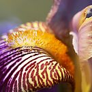 Iris dream by mooksool