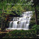 Liffey Falls, Tasmania, Australia by Debbie Steer