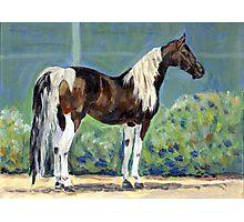 American Saddlebred Horse Portrait Photographic Print
