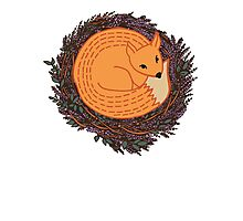 Pretty fox Photographic Print