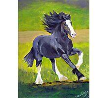 Shire Draft Horse Portrait Photographic Print
