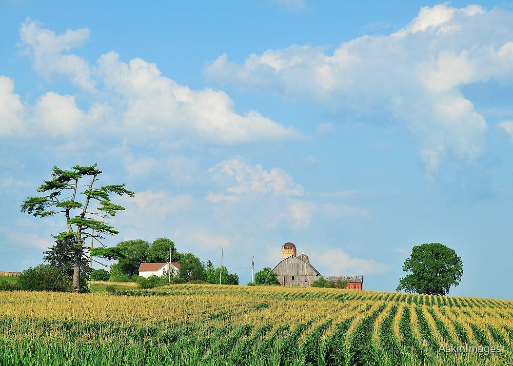 Landscape: York Region farmstead by AskinImages