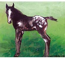 Appaloosa Foal Portrait Photographic Print