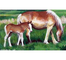 Belgian Mare and Foal Horse Portrait Photographic Print