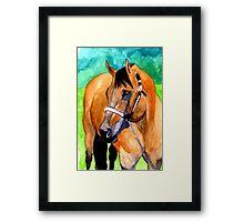 Buckskin Quarter Horse Halter Horse Portrait Framed Print