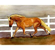 Haflinger Horse Portrait Photographic Print