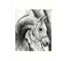 Arabian Halter Horse Portrait Art Print