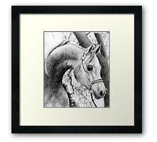 Arabian Halter Horse Portrait Framed Print