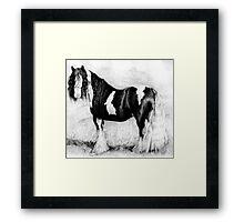 Gypsy Cob Horse Portrait Framed Print