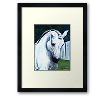 Andalusian Horse Portrait Framed Print