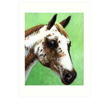 Appaloosa Horse Portrait Art Print