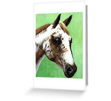 Appaloosa Horse Portrait Greeting Card