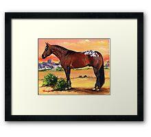 Appaloosa Horse Portrait Framed Print