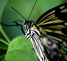 Wings by Yvette Bielert