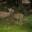 Thank you Deer, hold that pose! by Roxane Bay