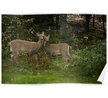 Thank you Deer, hold that pose! Poster