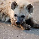 THE HYENA &#x27;PUP&#x27; - THE KRUGER NATIONAL PARK, South Africa by Magaret Meintjes