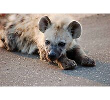 THE HYENA 'PUP' - THE KRUGER NATIONAL PARK, South Africa Photographic Print