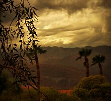 Desert Storm by Barbara  Brown