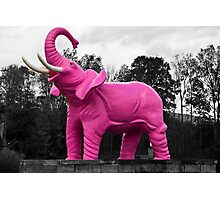 Pink Elephant Photographic Print