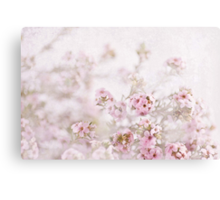 Musk Candy Canvas Print
