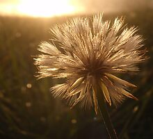 Make a Wish by heathernicole00