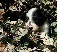 Pup in garden by BackTrack