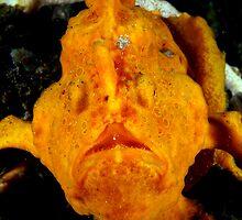 Anglerfish of the World by daveharasti