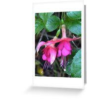 Fuchsias of New Zealand Greeting Card