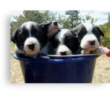 Pups in bucket 2 Canvas Print