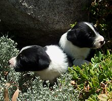 Pups and rocks by BackTrack